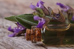 Fragrant sage oil in a glass bottle macro. horizontal. Fragrant sage oil in a glass bottle on the table macro. horizontal Royalty Free Stock Photo