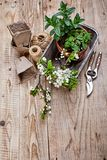 Fragrant spicy herb mint and melissa royalty free stock photos