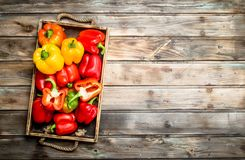 Fragrant sweet pepper on tray. On wooden background stock photo