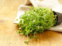 Fragrant thyme. Fresh organic bouquet of fragrant thyme on a wooden table Stock Photography