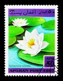 Fragrant water-lily (Nymphaea odorata), Aquatic Plants serie, ci. MOSCOW, RUSSIA - DECEMBER 21, 2017: A stamp printed in Afghanistan shows Fragrant water-lily ( stock images