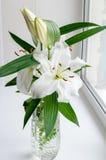 Fragrante bianco del giglio del fiore Fotografia Stock Libera da Diritti