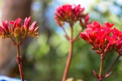 Fragranza da un fiore Fotografie Stock