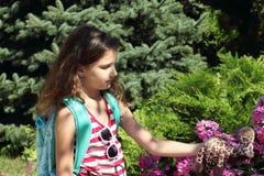 Fragranza dei fiori Fotografie Stock Libere da Diritti