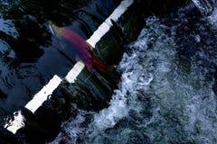 Frai des saumons Photographie stock libre de droits