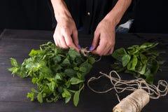 Frais élevez la récolte en bon état organique verte d'usine de feuille de groupe à disposition Photographie stock libre de droits