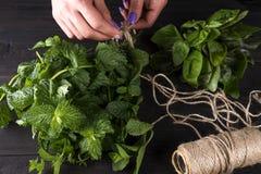 Frais élevez la récolte en bon état organique verte d'usine de feuille de groupe à disposition Photo libre de droits