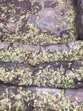 Frais gratuit d'automne de feuilles de beauté naturelle d'escaliers Image libre de droits