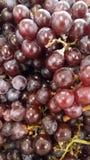 Frais organique d'agriculture de raisin Photographie stock
