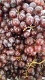 Frais organique d'agriculture de raisin Image libre de droits