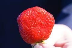 fraise Images libres de droits