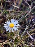 Fraise, Arizona Image libre de droits