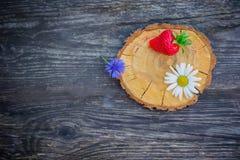 Fraise, bleuet et camomille sur une coupe circulaire en bois de scie Images stock
