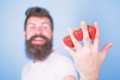 Fraise emballée avec des antioxydants de fibre de vitamine C Équipez les fraises de hippie de barbe entre le fond de bleu de doig images stock