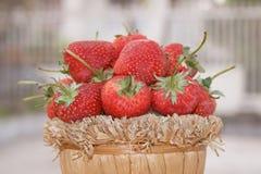 Fraise, foyer sur le groupe de fraises dans le panier sur naturel Image libre de droits