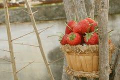Fraise, foyer sur le groupe de la fraise Photos stock