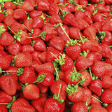 Fraise fraîche Photo stock