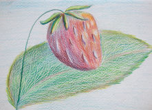 Fraise, illustration de crayon Photo libre de droits