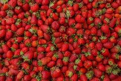 Fraise organique mûre rouge fraîche sur le marché d'agriculteurs Fond en gros plan de baie E image stock