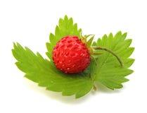 fraise sauvage Photographie stock libre de droits