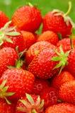 fraises Photos libres de droits