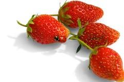 fraises de coccinelle Images libres de droits