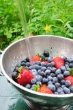 fraises de myrtilles Image stock