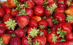 Fraises fraîches, fraises cassées Photos stock