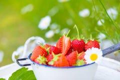 Fraises fraîches du jardin Photo stock