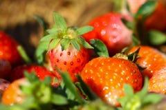 Fraises fraîches, fraises dans un panier dans le jardin, fruit sain Photos libres de droits