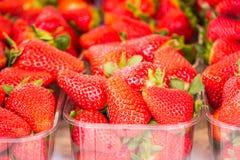 Fraises fraîches rouges sur un marché d'agriculteur Fin vers le haut Photographie stock libre de droits