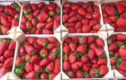 Fraises fraîches sur un marché de village Plan rapproché juteux mûr de fraises Grand fond pour une confiture de label, confiture  Photographie stock libre de droits