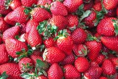 Fraises fraîches sur un marché de village Plan rapproché juteux mûr de fraises Grand fond pour une confiture de label, confiture  Photo stock