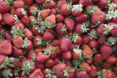 Fraises fraîches sur un marché de village Plan rapproché juteux mûr de fraises Grand fond pour une confiture de label, confiture  Image libre de droits