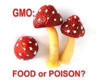 Fraises génétiquement modifiées Photo stock