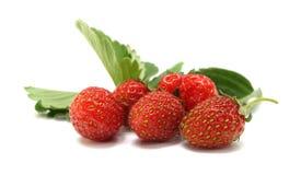 fraises sauvages Photographie stock libre de droits