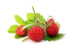 fraises sauvages Photos libres de droits