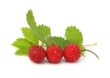 fraises sauvages Photo libre de droits
