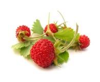 fraises sauvages Images libres de droits