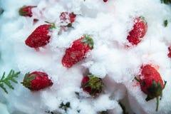 Fraises surgel?es dans la neige et la glace photo libre de droits