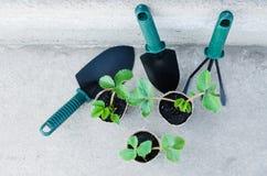 Fraisiers avec des outils de jardinage Images libres de droits