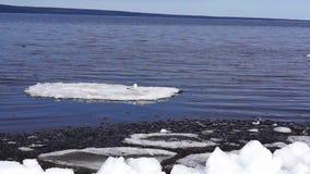 Frajer na lodowym floe zdjęcie wideo