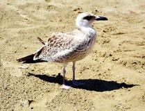Frajer na plaży Zdjęcia Royalty Free