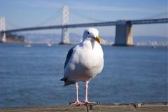 Frajer przy San Fransisco Zatoką Obraz Royalty Free