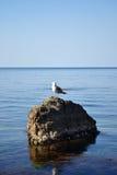 frajera morza kamień Obraz Royalty Free