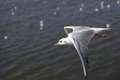 frajera morze Fotografia Royalty Free