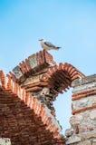 Frajera obsiadanie na Rujnowałem kościół Święci archaniołowie Michael i Gabriel w Bułgarskim miasteczku Nesebar na czerni Obraz Royalty Free