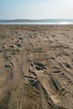 Frajery i istota ludzka ślada na piasku Zdjęcia Stock