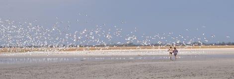 Frajery latają zdala od jeziora Zdjęcia Stock