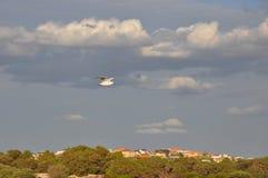 Frajery lub seagulls zdjęcie stock